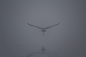 Photography - Foggy Flight
